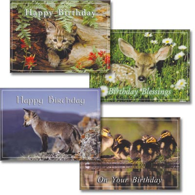 Children's Birthday Cards - Wildlife Babies - Set of 4